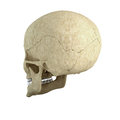 Single skull Stock Image