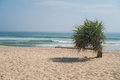 Single small palm tree on the beach over sea and sky Royalty Free Stock Photo