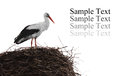 Single standing stork in her nest in spring season Royalty Free Stock Images