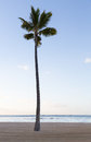 Single straight palm tree on sandy beach Royalty Free Stock Photos