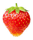 Single strawberry Royalty Free Stock Photo