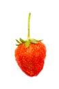 Single Strawberry Fruit. Royalty Free Stock Photo