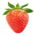 Single strawberry fruit Royalty Free Stock Photo