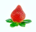 Single strawberry with green leaf in the white background Royalty Free Stock Photo