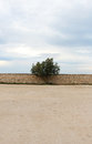 A single tree against a stone wall, cloudy sky Royalty Free Stock Photo