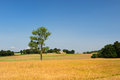 Single tree in agricultural field france Royalty Free Stock Images