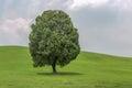 Single tree alone on field Royalty Free Stock Photo
