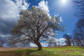 Single tree on blossoming meadow in idyllic hillside Royalty Free Stock Photo