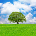 Single tree and cloudy blue sky Royalty Free Stock Photo
