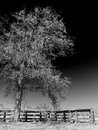 Single tree and fence black white Royalty Free Stock Photo