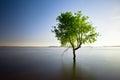Single tree  in lake Royalty Free Stock Photo