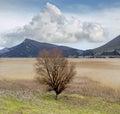 The single tree on the lake Royalty Free Stock Photo