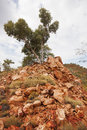 Single tree on rocky outcrop view of outback queensland Royalty Free Stock Photography