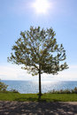 Single tree and a sparkling blue lake Royalty Free Stock Photo