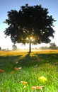 Single tree with sun Royalty Free Stock Photography