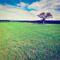 Single tree surrounded by green fields instagram effect Stock Image