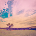 Single tree surrounded by green fields retro effect Royalty Free Stock Photos