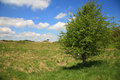 Single tree on top of the mendip hills near cheddar somerset uk Stock Photos
