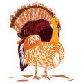 Single turkey