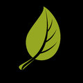 Single vector flat green leaf. Herbal and botany art symbol