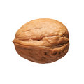 Single walnut in shell isolated Royalty Free Stock Photo