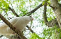 Single white pigeon dove on the rope under shadow of big tree ready to jump and fly at the corner start concept with Stock Photos