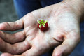 Single wild raspberry in womans open palm of hand.