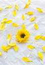 Single yellow flower on white paper background with petals aroun Royalty Free Stock Photo