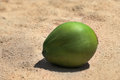 Single young new green coconut resting on hot sunny sand uncut and whole Royalty Free Stock Images
