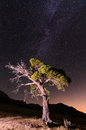 Singular tree under the milky way a Stock Image
