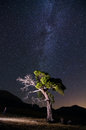 Singular tree under the milky way a Stock Photos