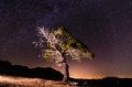Singular tree under the stars a milky way Royalty Free Stock Photography