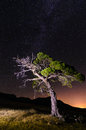 Singular tree under the stars a milky way Royalty Free Stock Images