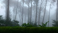 Sintra forest fog in the in mountain in portugal Stock Photography