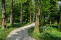 Sinuous concrete path in shaded woods at sunny spring noon Royalty Free Stock Photo