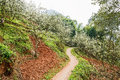 Sinuous countryside footpath in pear blossom on sunny spring Royalty Free Stock Photo
