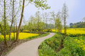 Sinuous countryside road in floweirng spring afternoon Royalty Free Stock Photo