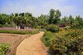 Sinuous path in flowers at sunny summer noon Royalty Free Stock Photo