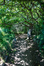 Sinuous shaded path under green foliage and tortuous branches Royalty Free Stock Photo