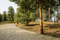 Sinuous shady path on sunny spring day Royalty Free Stock Photo
