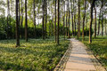Sinuous shady path through woods in warm afternoon sunlight Royalty Free Stock Photo