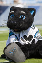 Sir Purr Kansas City Chiefs Vs Carolina Panthers Royalty Free Stock Photo