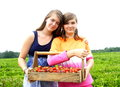 Sisters picking strawberries two girls out in a field they share the weight of the wood crate full of fruit Royalty Free Stock Photography