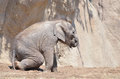 Sitting baby elephant a asian sits in the mud Stock Image