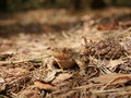 Sitting brown toad Royalty Free Stock Photo