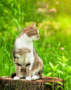 Sitting Cat In Grass On Stump