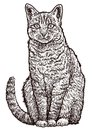 Sitting cat illustration, drawing, engraving, ink, line art, vector
