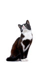 Sitting cat little kitten out of curiosity glancing up Stock Images