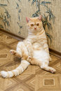 Sitting cat the red sits leaning on a wall Royalty Free Stock Photo