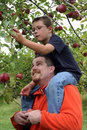 Sitting on Dad's shoulders Royalty Free Stock Photo